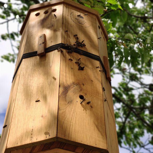 lunaire ruche refuge